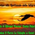 PAVIA – In occasione delle giornate dell'Eurobirwatch 2014 e in collaborazione con la sezione pavese della LIPU, sabato 4 ottobre lungo il crinale di Costa Pelata, nel comune Montalto Pavese...