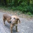 RIVANAZZANO – Questo cane è stato avvistato ieri pomeriggio sulla strada che da Nazzano conduce in località Buscofà. L'animale è molto impaurito e diffidente,con circospezione si avvicina manon si lascia...