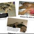 PAVIA VOGHERA VIGEVANO – I Danimarca è legale abusare sessualmente degli animali. Firma anche tu per abolire questo scempio di esseri innocenti. Vai alla petizione http://bit.ly/1ne1Hlp