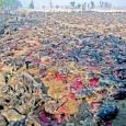 printDigg DiggPAVIA VOGHERA VIGEVANO – Ogni cinque anni in Nepal a partire 28 Novembre si svolge il festival del sacrificio Gadhimai. Centinaia di migliaia di animali (dai 300 ai 500...