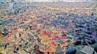 PAVIA VOGHERA VIGEVANO – Ogni cinque anni in Nepal a partire 28 Novembre si svolge il festival del sacrificio Gadhimai. Centinaia di migliaia di animali (dai 300 ai 500 mila)...