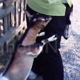 VARZI – Anche l'Enpa di Voghera chiede aiuto per aiutare l'Associazione LE ORME SUL CUORE di Varzi, impegnata a salvare 12 caprette sottratte al macello. Al momento servono braccia per...