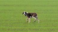 VOGHERA – l'Enpa lancia un appello affinchè i residenti di strada Grippina non alimentino più il cane che da mesi bazzica nella zona. La richiesta in quanto è in corso...