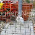 VOGHERA – Nuovo appello per la ricerca di volontari che aiutino il canile Enpa di Voghera. Volontari che però non si occupino solo di animali ma anche della struttura. I...
