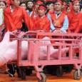"""VOGHERA - In Vietnam esiste un'antica cerimonia che prevede di sezionare lentamente in due, con una lunga alabarda,un maiale """"vivo"""" . Firma per favore per dar voce ad animali innocenti..."""