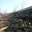 """VARZI – La Comunità Montana dell'Oltrepò Pavese ha comunicato la proroga per il taglio dei boschi, così """"come previsto dal regolamento regionale n.5/2007 e considerato che nel periodo invernale si..."""