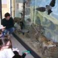 """VOGHERA – Nell'ambito del progetto """" Biodiversità a scuola"""", promosso dal Civico Museo di Scienze Naturali """"G. Orlandi"""" e dall'Associazione Naturalistica Culturale """"La Pietra Verde"""", le classi 4^ A, 4^..."""