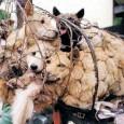 PAVIA VOGHERA VIGEVANO – Un ultimo sforzo per cercare di impedire che in Cin, a Yulin, si svolga il festival della carne di cane. Si tratta di un festival nato...