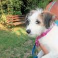 VOGHERA – Ecco un nuovo modo di abbandonare un animale. Legarlo ad un palo della piazza. E' successo nei giorni scorsi in città. La cucciola che vedete in foto è...