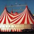 VOGHERA – A Voghera dal 1 al 6 ottobre, un Circo sarà presente nel Piazzale Fermi. Enpa e Lav protestano e si rivolgono direttamente al Comune per chiedere di intervenire....