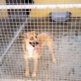"""VOGHERA – L'Enpa di Voghera chiede aiuto per un cane trovato in strada. """"Questo cane femmina privo di chip è stato recuperato in strada per Torremenapace a Voghera. Qualcuno la..."""