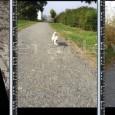 PONTE NIZZA – La ex linea ferroviaria Voghera-Varzi, fra San Ponzo Semola e Ponte Nizza. E' da qui che arriva una nuova segnalazione di cani avvelenati con esche topicida. L'allarme...
