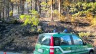 BRALLO – Una pineta sta bruciando in Alta Valle Staffora. Succede nel comune del Brallo di Pregola dalle 15.30 circa di oggi. La zona colpita si trova a ridosso della...