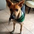 printDigg Digg VOGHERA – Birillo è stato ritrovato! VOGHERA – Una cane è stato perso in zona stazione. L'appello della famiglia. Per favore, se trovate questo cane contattare Marcia e...
