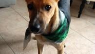 VOGHERA – Birillo è stato ritrovato! VOGHERA – Una cane è stato perso in zona stazione. L'appello della famiglia. Per favore, se trovate questo cane contattare Marcia e Antonio. Facendo...