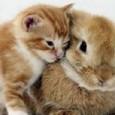 """MILANO – """"Con l'approvazione di questo regolamento forniamo uno strumento innovativo e all'avanguardia nella normativa nazionale che introduce alcune importanti novità relative alla gestione degli animali d'affezione"""". Lo ha detto..."""