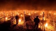 CASTEGGIO – L'improvviso gelo calato sull'Italia del nord e sulla provincia di Pavia fa paura ai viticoltori dell'Oltrepo pavese. Il caldo dei giorni scorsi ha fatto germogliare le viti, che...
