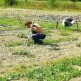 VOGHERA – L'Agricoltura Sociale in Lombardia è in prima linea sul fronte del sostegno e della valorizzazione dell'inclusione lavorativa di soggetti con svantaggio, tra cui disabilità, coinvolti in attività del...