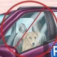 """VIGEVANO - I """"Carabinieri di quartiere"""" hanno denunciato un uomo per aver lasciato i propri cani nella macchina parcheggiata sotto al sole. E' accaduto sabato a Vigevano. Ad accorgesi dell'emergenza..."""