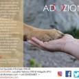 """VIDIGULFO PAVIA - L'associazione Squadra 4 Zampe ONLUS ha bisogno dell'aiuto dei residenti nella provincia di Pavia per dare una famiglia ai cani del suo """"nuovo"""" rifugio. Il sodalizio da..."""