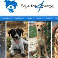 """VIDIGULFO PAVIA OLTREPO - L'associazione Squadra 4 Zampe ONLUS ha bisogno dell'aiuto dei residenti nella provincia di Pavia per dare una famiglia ai cani del suo """"nuovo"""" rifugio. Il sodalizio..."""