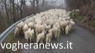 MONTU' BECCARIA STRADELLA – Giovedì i carabinieri della Stazione di Montù Beccaria hanno deferito in stati di libertà un28enne di nazionalità albanese, residente a Stradella, per i reati di abbandono...