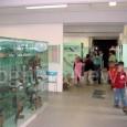 """VOGHERA – Il Civico Museo di Scienze naturali """"G. Orlandi"""" di Voghera, in collaborazione con l'Associazione """"La Pietra Verde"""", propone per il giorno 29 Marzo un'intera mattinata di giochi e..."""