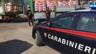 """VOGHERA – Con un lungo inseguimento i carabinieri della Compagnia di Stradella hanno sventato un maxi furto di concime agricolo dalla ditta """"Apsov Sementi"""" di Voghera. I militari, alla fine..."""