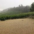TORRAZZA COSTE – Dopo l'ennesimo nubifragio che, con grandine e pioggia, l'altro ieri ha portato disagi e distruzione sulle colline dell'Oltrepo pavese, parte la corsa ai risarcimenti per gli agricoltori....