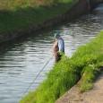 VOGHERA OLTREPO – La Regione Lombardia dopo aver approvato, nel gennaio scorso, il nuovo Regolamento regionale della pesca, nei mesi successivi ha elaborato nuovi regolamenti di bacino che, completati, entreranno...