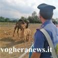 VOGHERA – Nella mattinata di ieri i Carabinieri della Compagnia di Voghera, hanno effettuato controlli straordinari per la tutela dell'ambiente e della salute pubblica, svolgendo due ispezioni in altrettanti insediamenti...