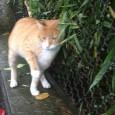 printDigg DiggRIVANAZZANOSALICE – Tre gatti investiti in due mesi sulla medesima curva maledetta. E' una strage di mici quella che si sta verificando fra Rivanazzano e Salice. Il fatto è...