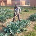 VOGHERA – La rete della Agricoltura Sociale Pavia, in collaborazione con l'Università degli studi di Pavia, Dipartimento di Scienze della Terra e dell' Ambiente, si é aggiudicata, nell'ambito del Bando...