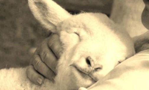 A Pasqua non mangiarli