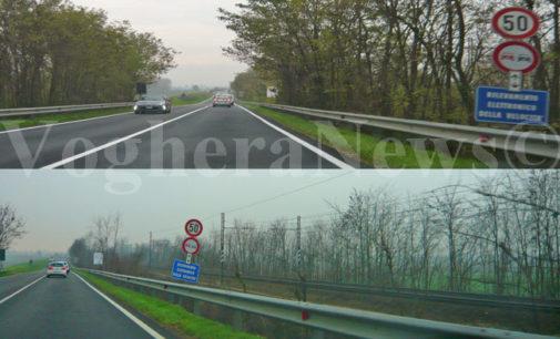 PAVIA VOGHERA 26/07/2013: Tagliati molti dei (già pochi) alberi selvatici presenti lungo le strade della provincia di Pavia. Le leggi non li tutelano. Per salvarli servirebbero nuove normative