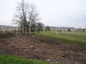 Alcuni degli alberi tagliati sulla Vigentina a Bornasco (Pavia)