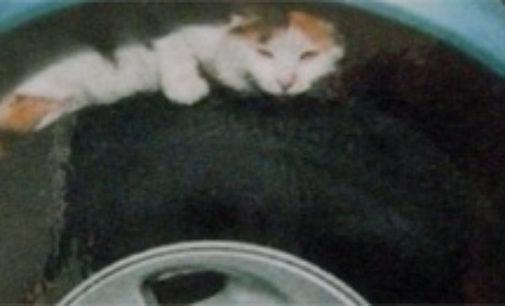 """PAVIA VOGHERA  VIGEVANO: Gatti sotto le auto o nelle ruote contro il freddo. """"Attenti a quando partite!"""""""