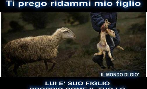 PAVIA VOGHERA VIGEVANO 13/04/2014: Almeno a Pasqua evitiamo di uccidere…