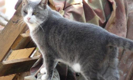 PAVIA 27/10/2014: Opera Animalia. Nasce una nuova associazione che si occupa di animali