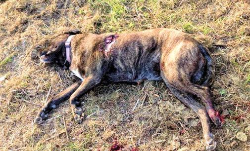 MONTALTO 06/11/2014: Cacciatore ammazza un cane. Il proprietario lancia un appello per avere giustizia. Mentre in rete qualcuno grida… Vendetta!