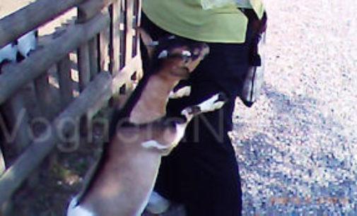 VARZI 28/11/2014: Ancora un appello per salvare 12 caprette dell'oasi LE ORME SUL CUORE