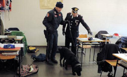 MORTARA 20/11/2014: Blitz a scuola con Balto, il cane antidroga. Una denuncia e 3 segnalazioni