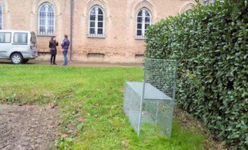 VOGHERA 04/11/2014: All'istituto Gallini è caccia al… lupo. Appello dell'Enpa ai residenti