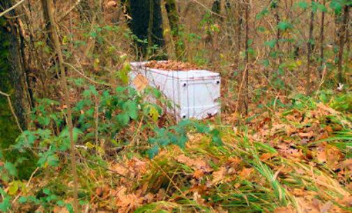 FORTUNAGO 23/12/2014: Incivili lordano la natura lungo la Sp138. La segnalazione di un lettore