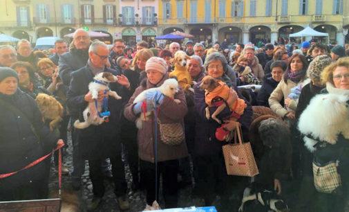 VOGHERA 19/01/2015: Sempre di più gli amanti degli animali. Quasi 1000 persone in piazza Duomo per la Benedizione