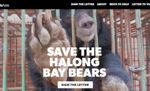 PAVIA VOGHERA VIGEVANO: Ancora 13 Orsi della Luna morti ad Halong. Una firma può aiutare a salvare i superstiti
