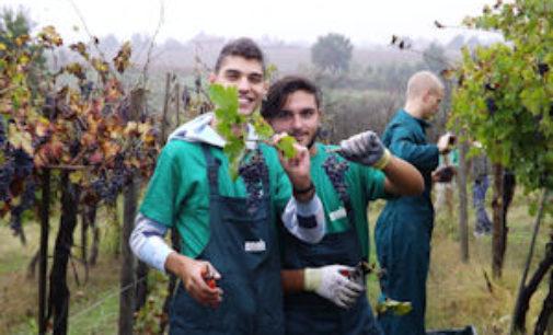 TORRAZZA COSTE 13/01/2015: Riccagioia ed Enaip assieme per il corso di studi in Vitivinicoltura