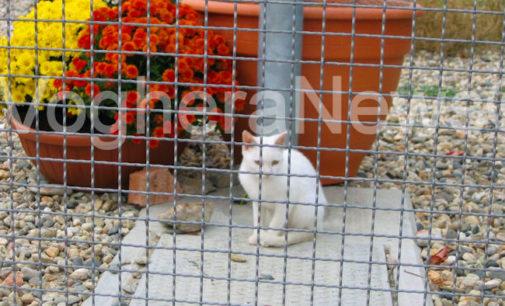 VOGHERA 13/02/2015: Enpa. Il canile cerca manutentori volontari per la cura della struttura