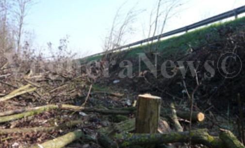 VARZI 26/03/2015: Prorogati i termini per il taglio dei boschi