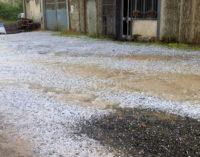 VOGHERA 21/05/2015: Bomba d'acqua e grandinate nell'Oltrepo vogherese. Coldiretti mobilita i tecnici per verificare i danni